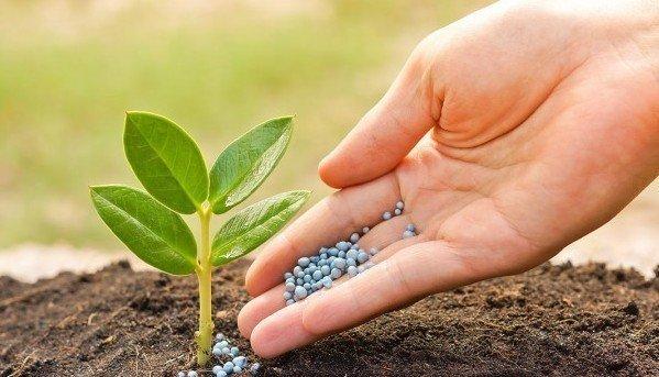 """Северодонецкий """"Азот"""" возобновил производство минеральных удобрений"""